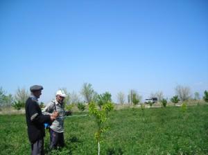 7.Hakob's-orchard
